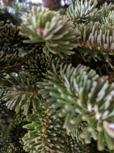 "<img src=""Civil War pocket tree.jpg"" alt=""Civil War pocket tree.jpg"">"