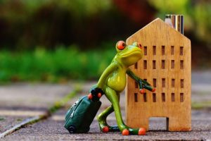 "alt=""frog with luggage returning for another visit"""