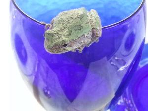 "alt:""tree frog in night vision garden"""